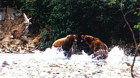 bear3-mittlere-webansicht.jpg